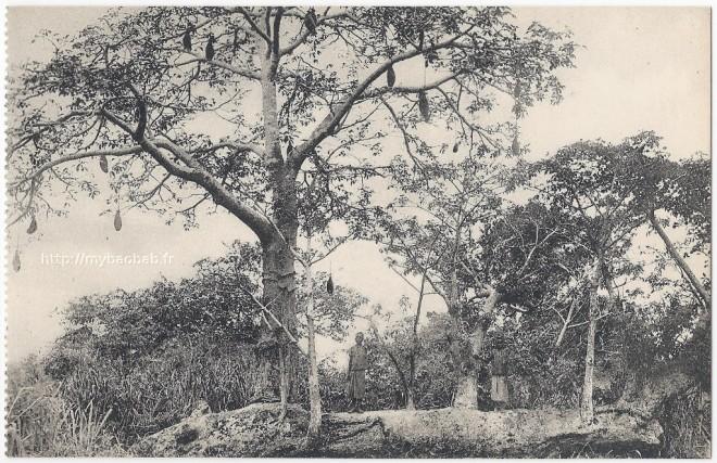 baobab_avec_fruit-660x427.jpg